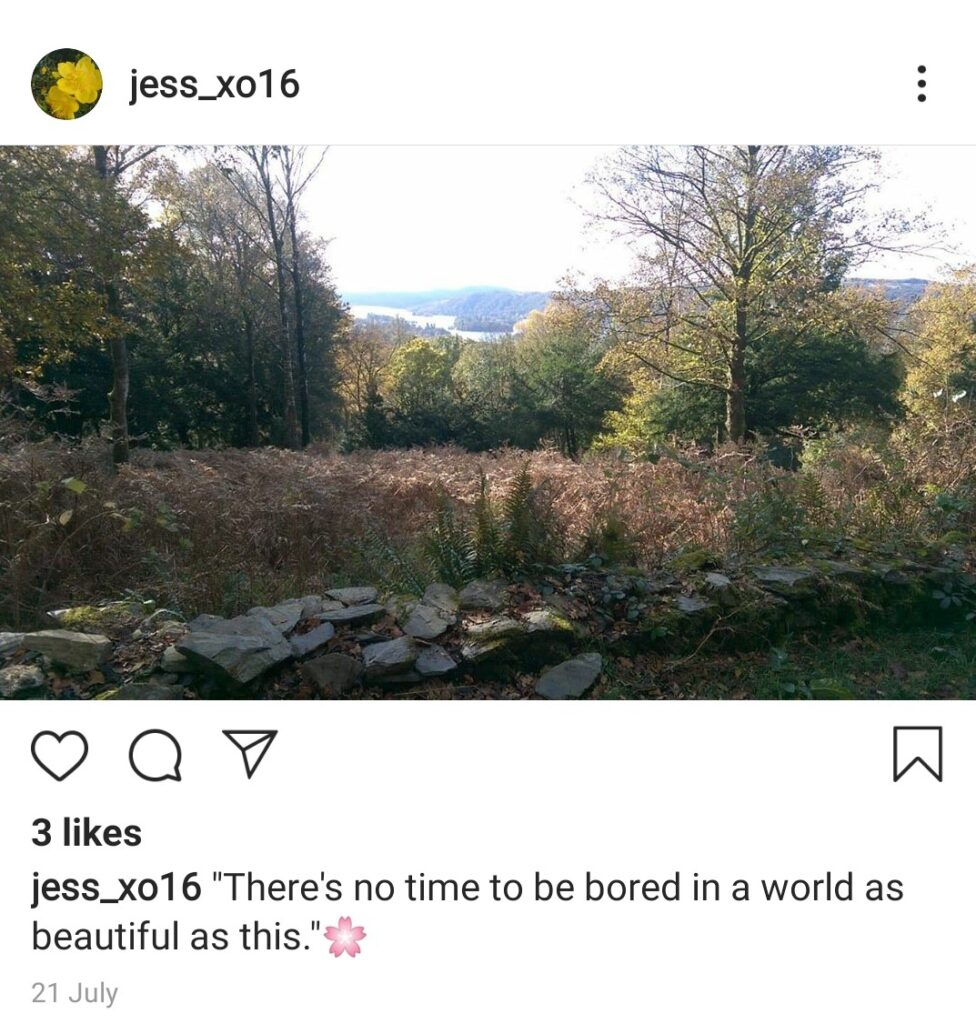 "Screen capture of Jess' Instagram post of a forest in autumn with the sky visible in the background and a small, overgrown stone wall in the foreground. The caption reads ""There's no time to bored in a world as beautiful as this""."